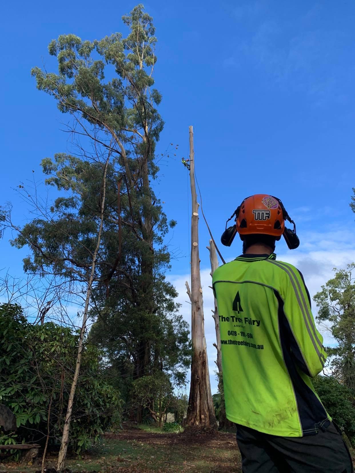 The Tree Fairy Arborist